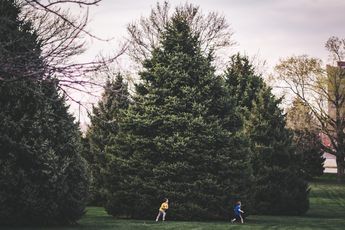 15 Spring Activities To Do with Your Family (during isolation)